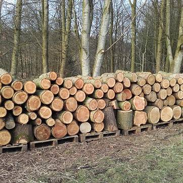 Logs ready to split for the biomass boiler